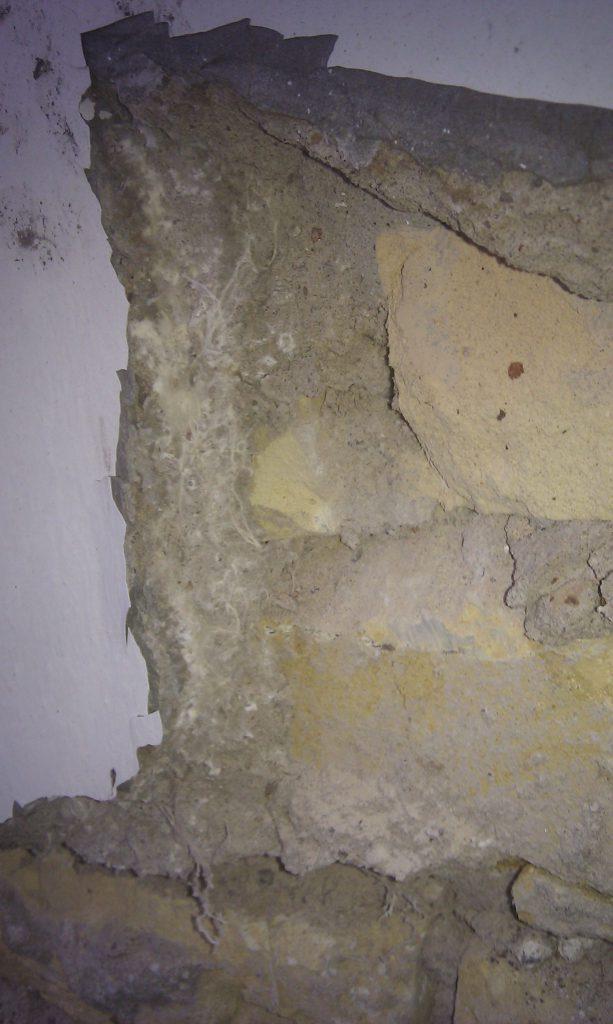 Hausschwamm Mycel im Mauerwerk