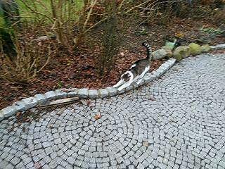 Neuanlage einer Terrasse aus Pflastersteinen